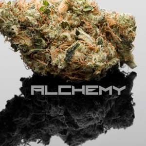 Alchemy Medical Delivery