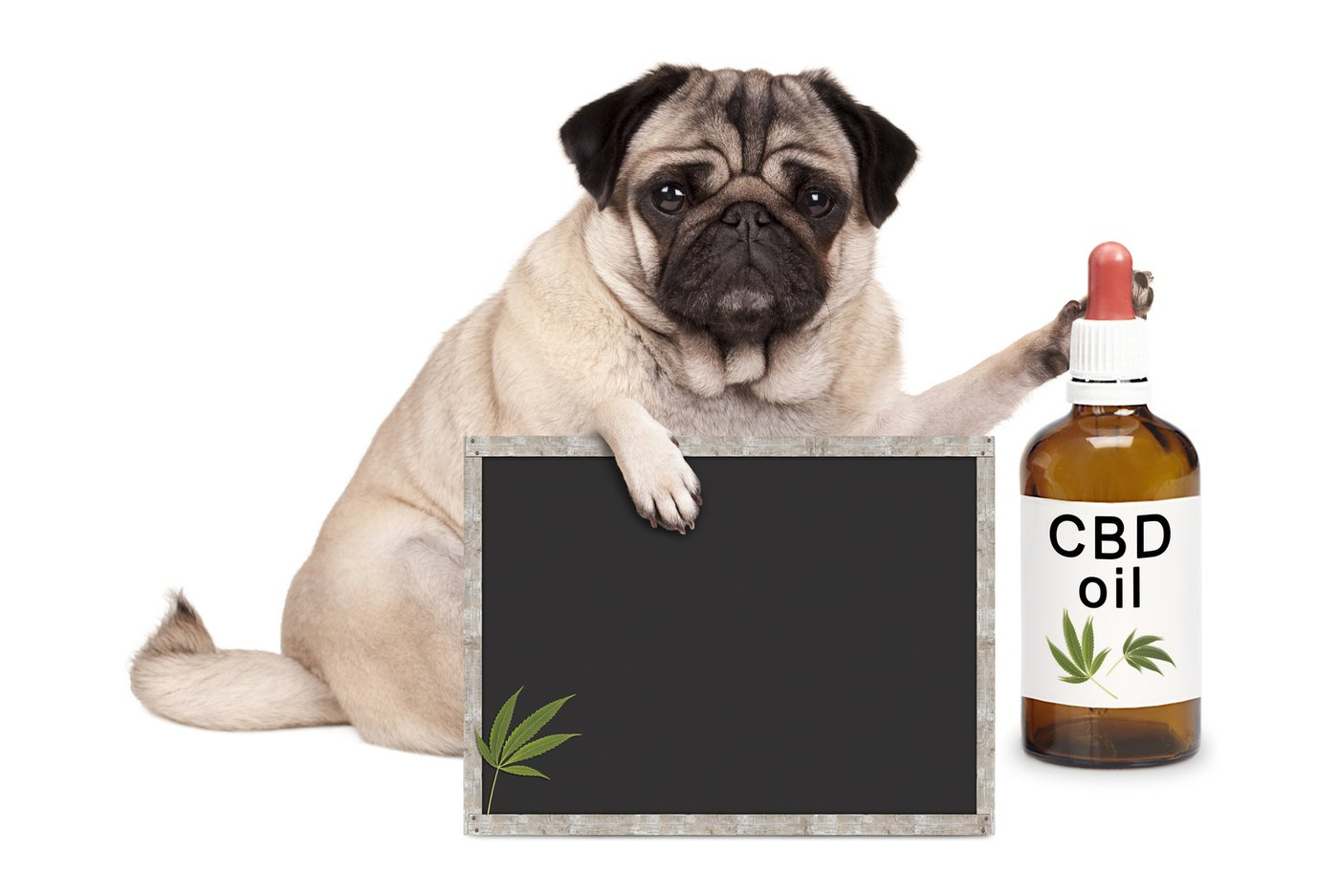 cbd good for pets