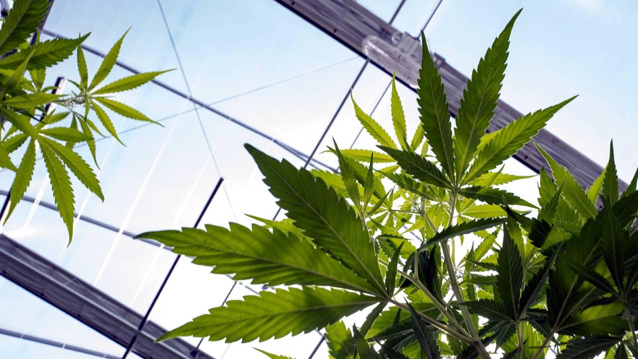 Cannabis Business Must Avoid