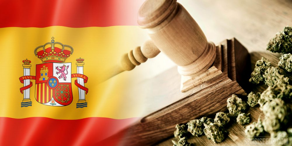 The future that is expected for the Cannabis social club is still uncertain in Spain