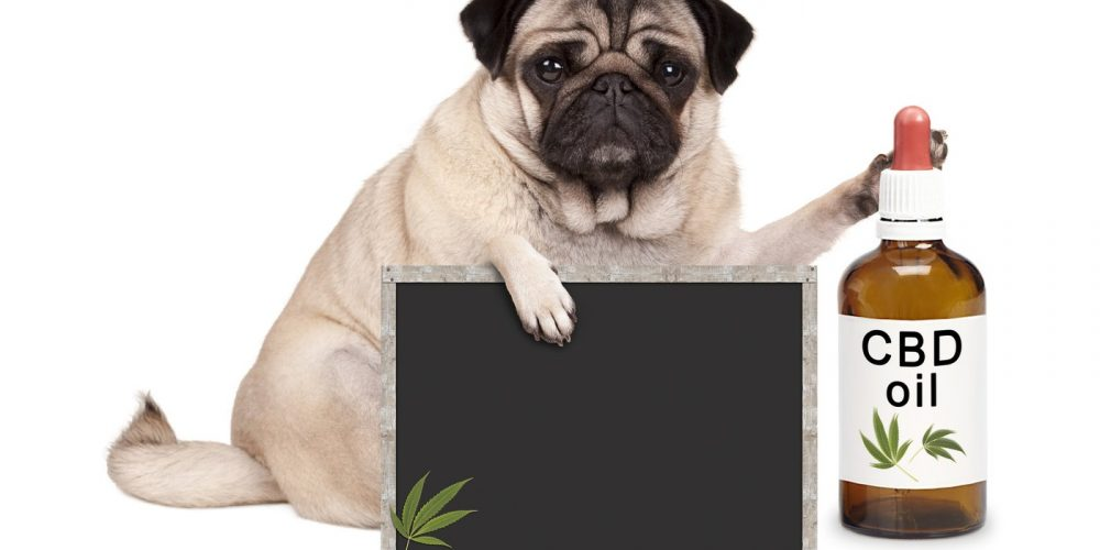 How is CBD good for your pets? Everything you may need to know