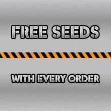 The Vault Cannabis Seeds Store