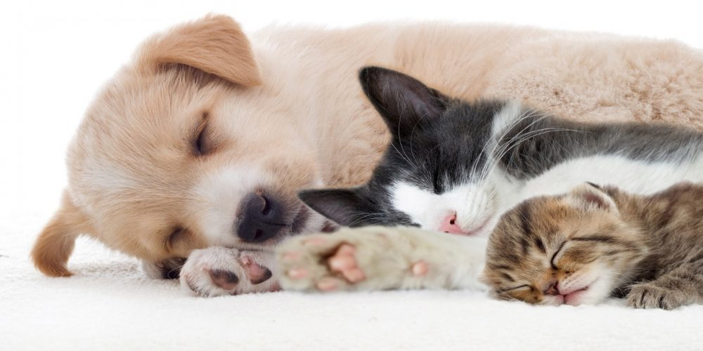 The Benefits of CBD Oil for Pets with Anxiety
