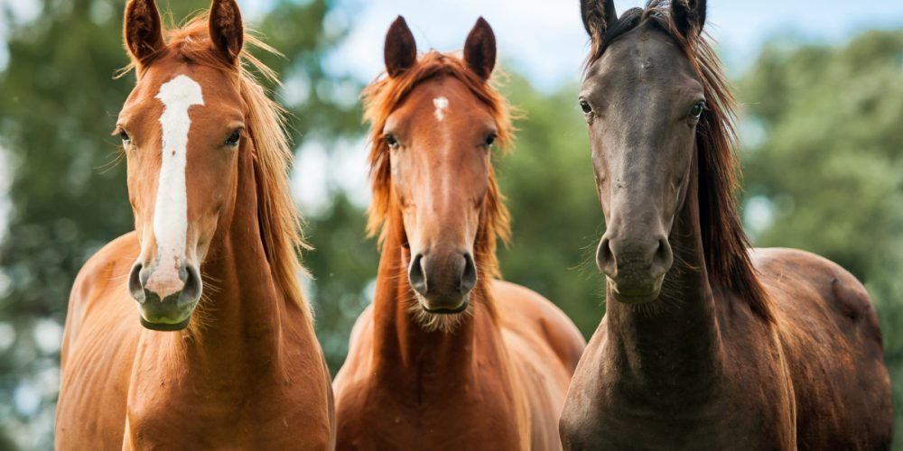 Why should you use CBD with your horse?