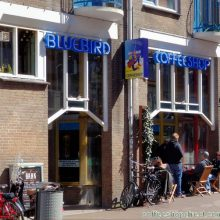 The  Bluebird Coffee Shop / Netherlands