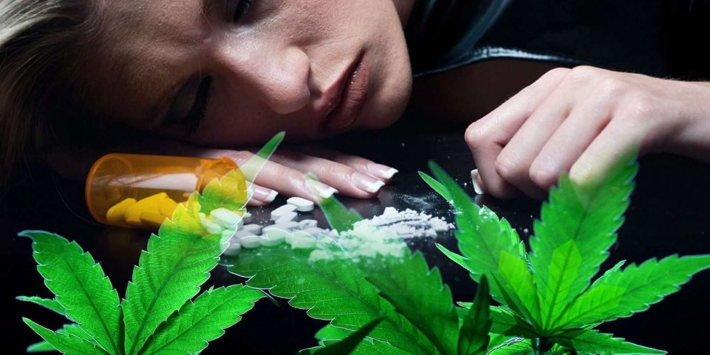 Is Marijuana The Cure To The Opioid Crisis?
